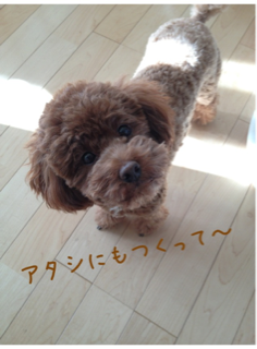 iphone/image-20130113222121.png